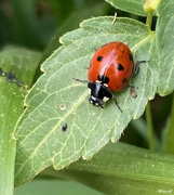 26th Feb 2021 - Ladybird hunting