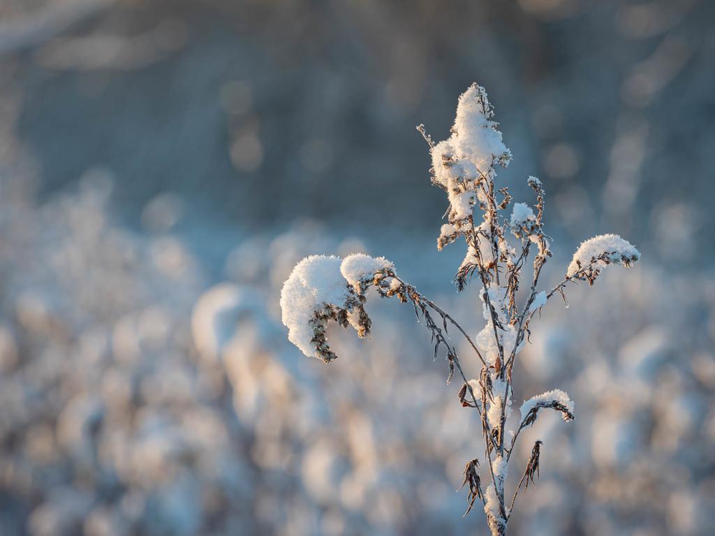 The memory of winter  by haskar