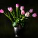 simple beauties by jernst1779