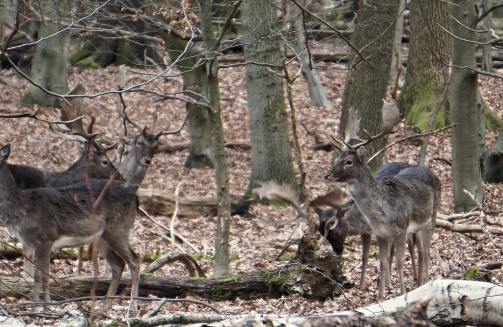 Oh deer he's filming by runner365
