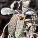First ladybird
