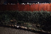 21st Feb 2021 - Night Scene: A Fence with Cups.