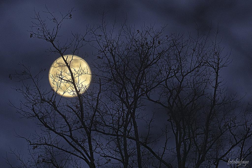 Full Moon by fayefaye