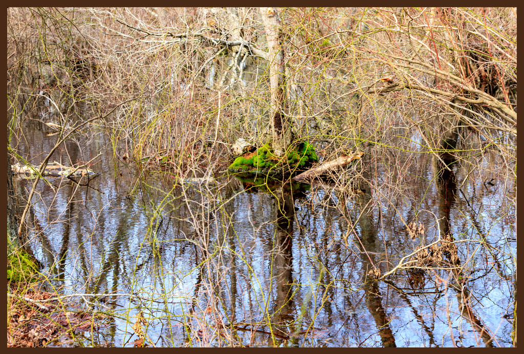 Nature Trail Spung by hjbenson