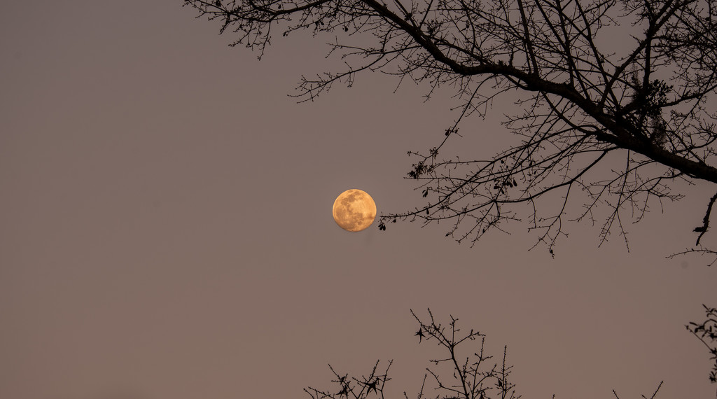 This Weeks Full Moon ! by rickster549
