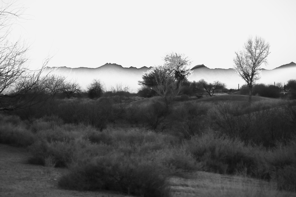 Desertscape by blueberry1222