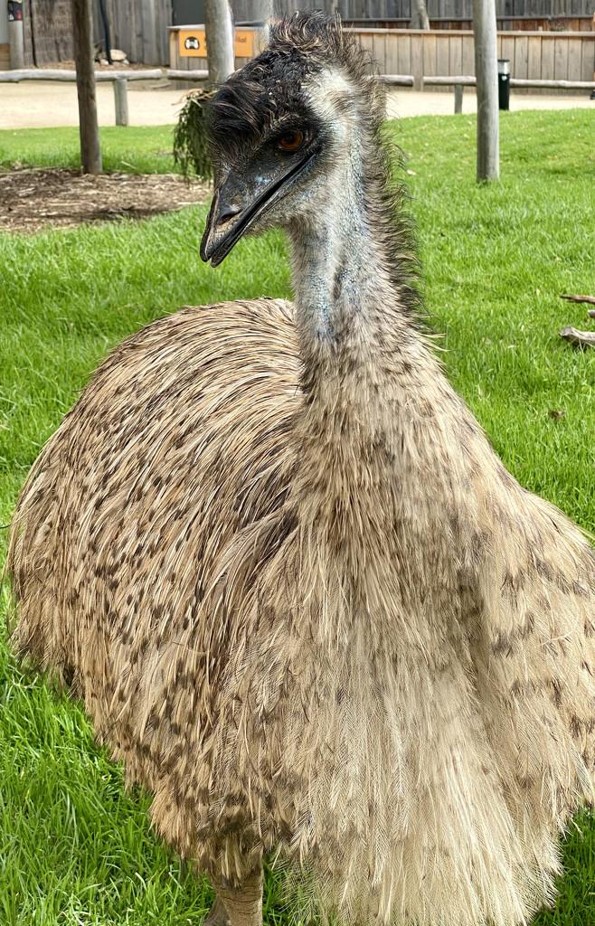 Emu by kjarn