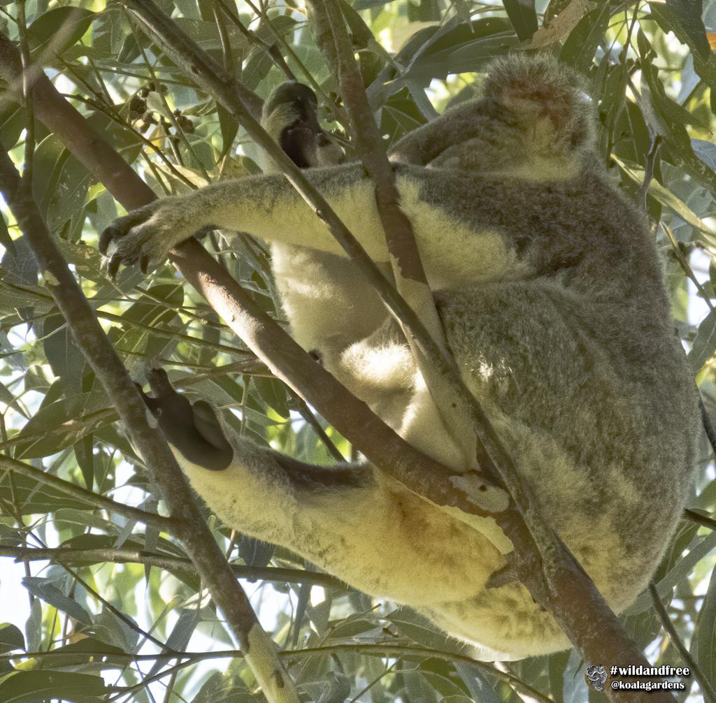 that takes the cake by koalagardens