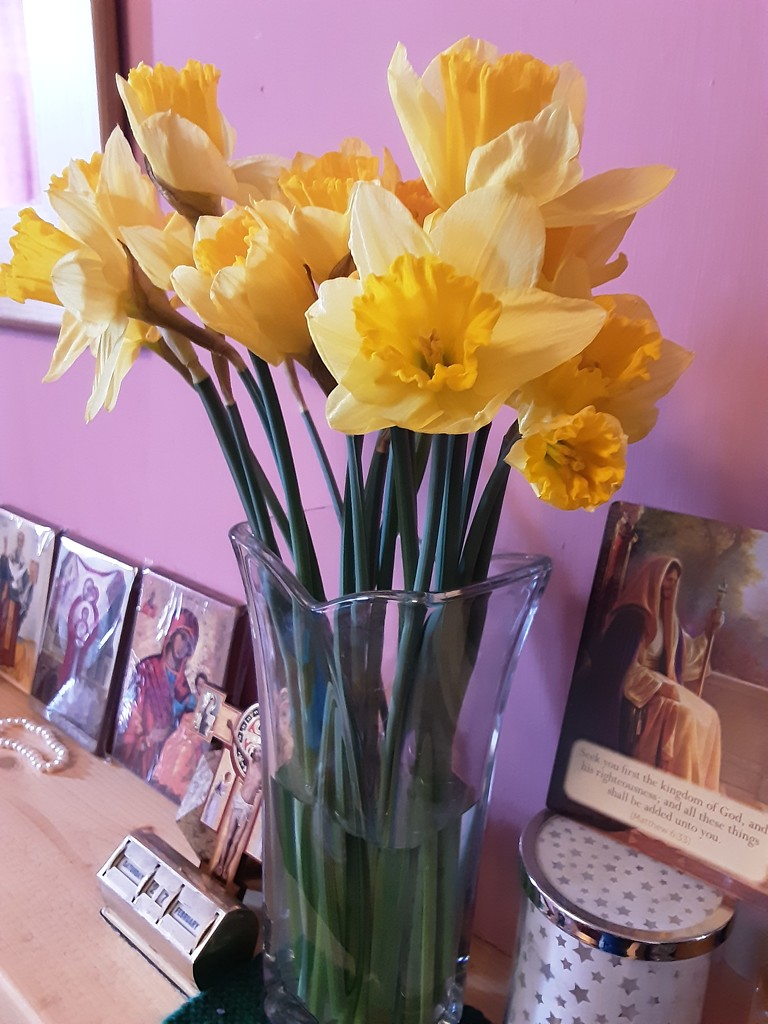 A vase of Daffodils  by grace55
