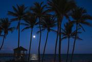 27th Feb 2021 - Tropical vibes
