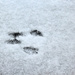 Y12 D058 Mouse Tracks in the Snow