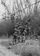 27th Feb 2021 - How often have we passed this tree....