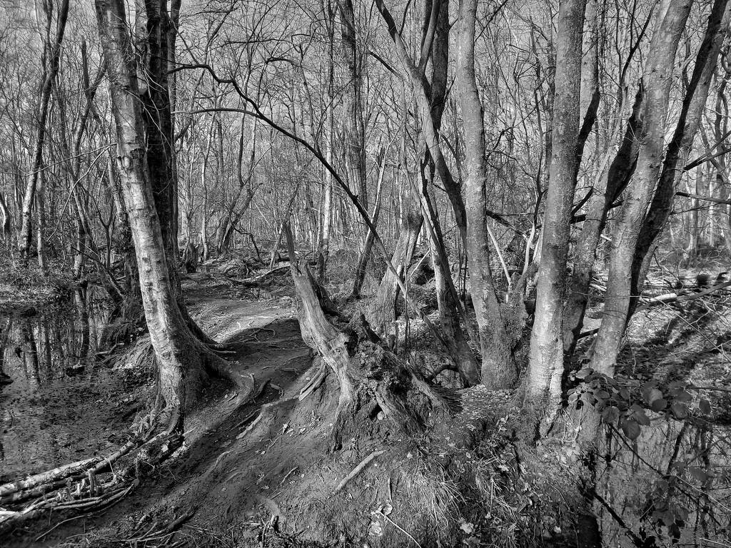 22nd Feb Southwood  by valpetersen