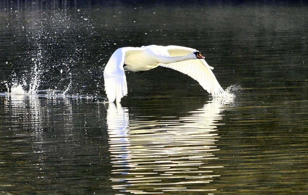 Splash. by tonygig