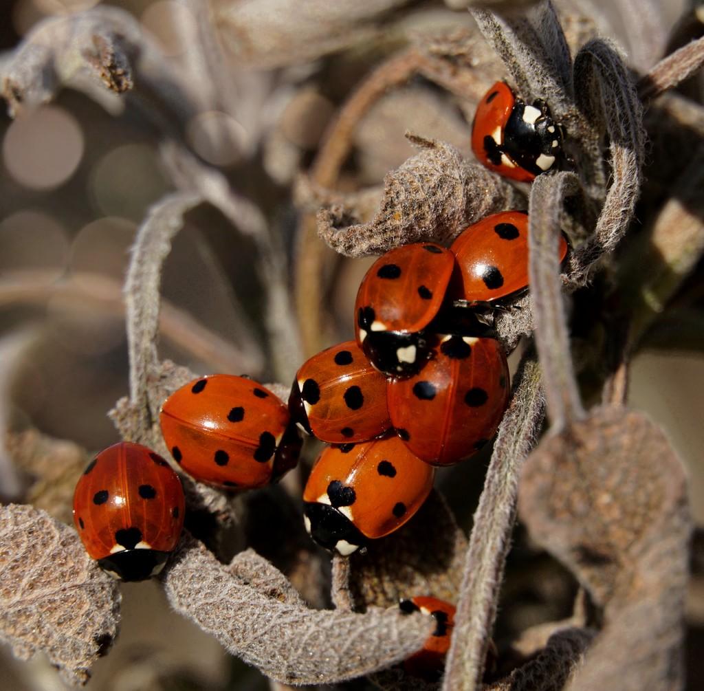 Basking Bugs by lucycameron