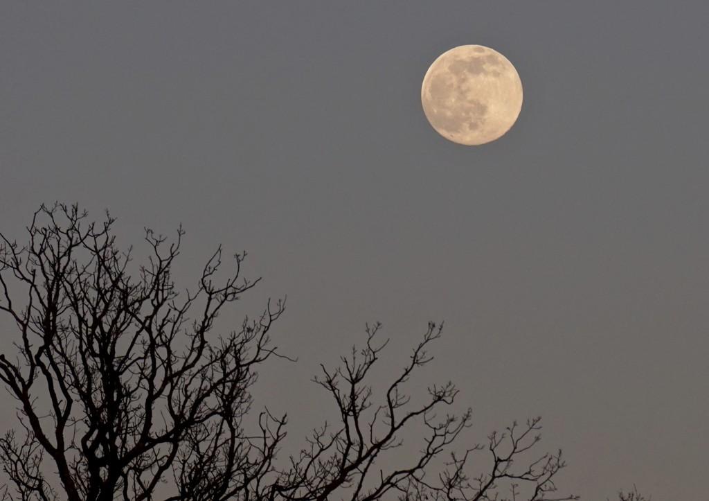 the snow moon by quietpurplehaze
