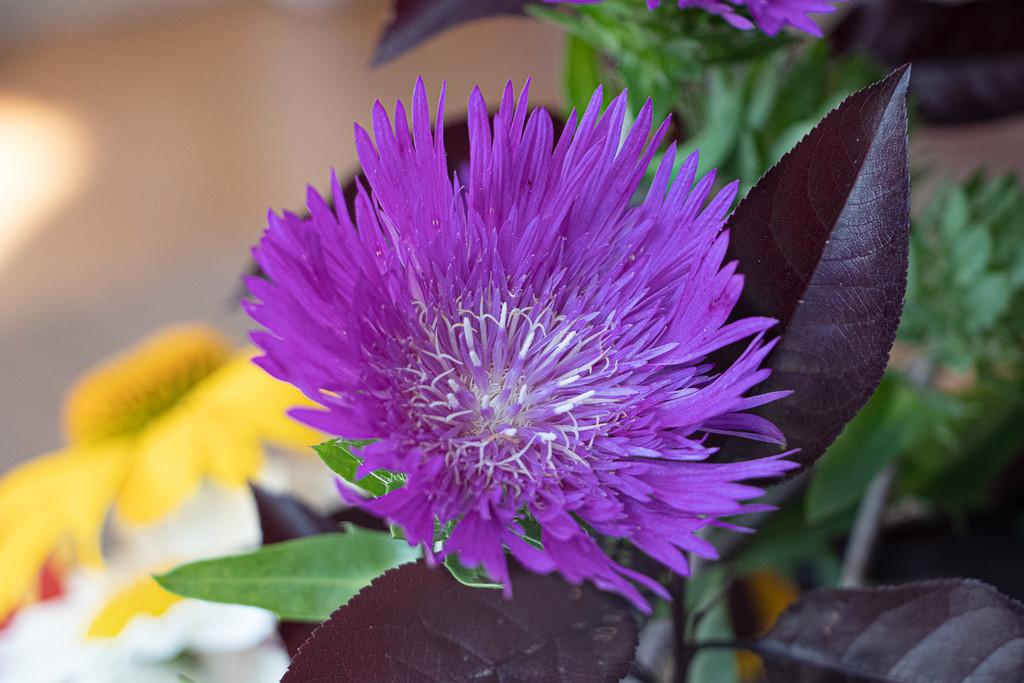 Patty's Flower by cm_saratoga