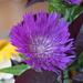 Patty's Flower
