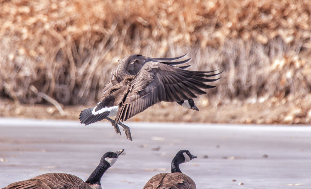 landing by aecasey