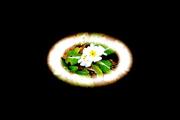 27th Feb 2021 - Primrose are blooming.