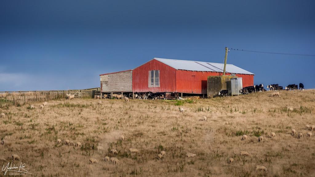 Rural New Zealand by yorkshirekiwi