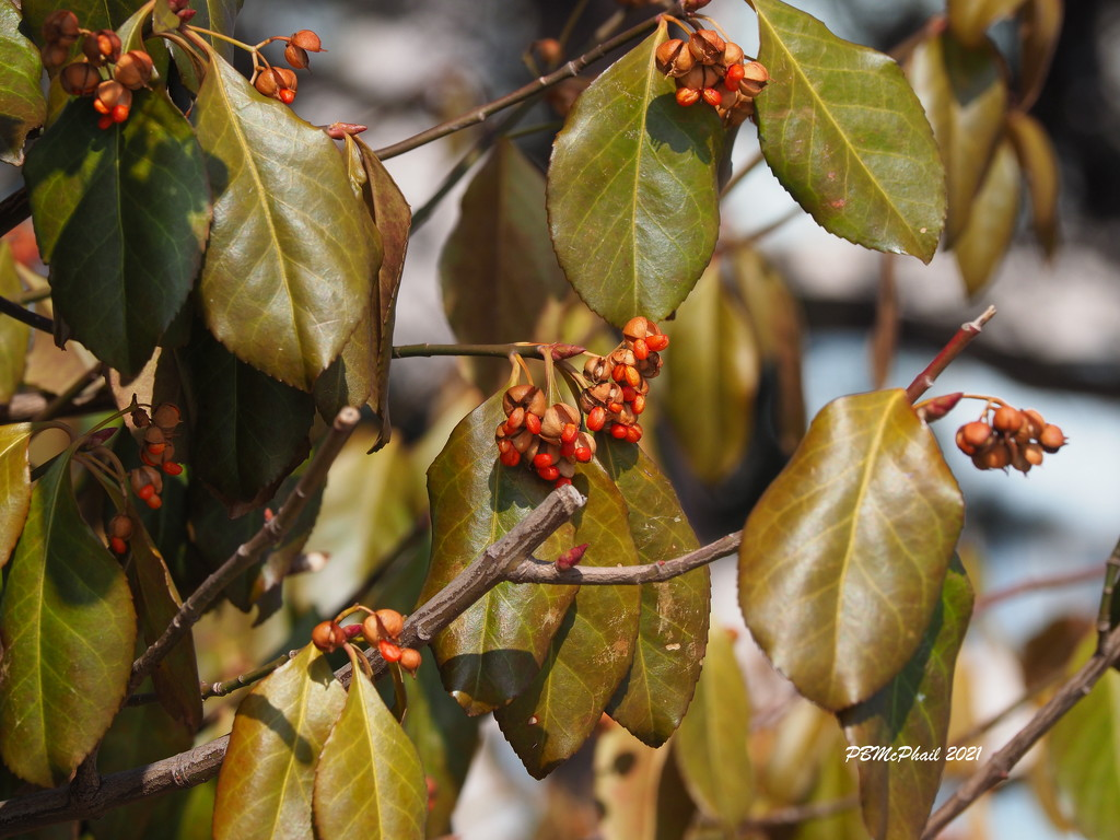 Winter Colours by selkie