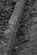 16th Feb 2021 - Mossy Curb