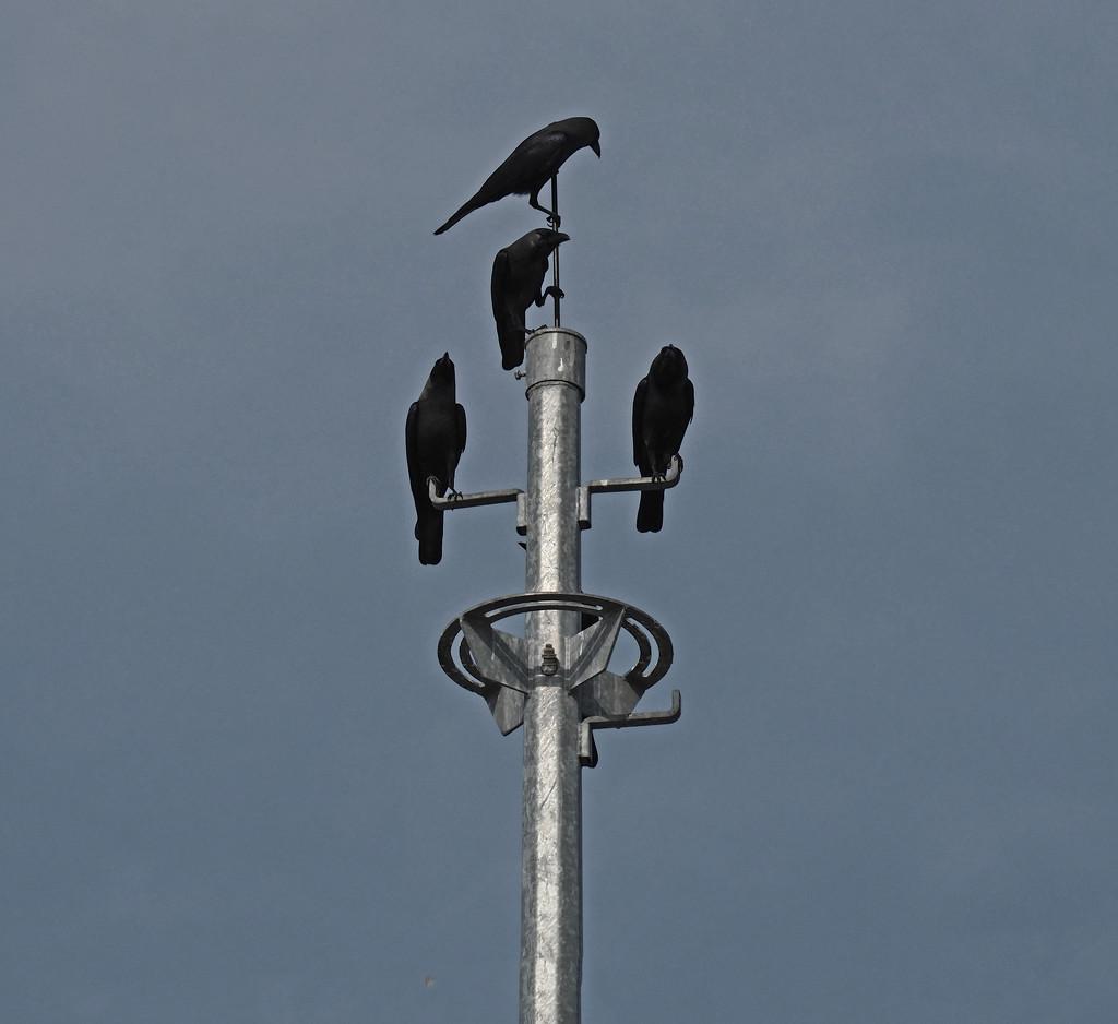 We four Crows by ianjb21