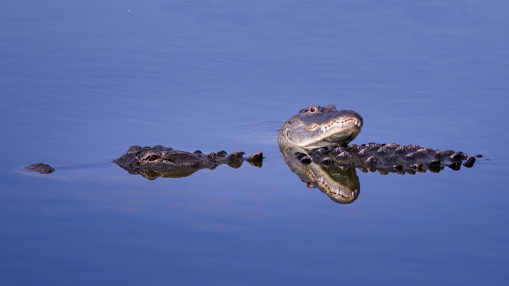 Alligator family love ? by dutchothotmailcom