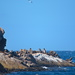 Schouten Island Cruise (11)