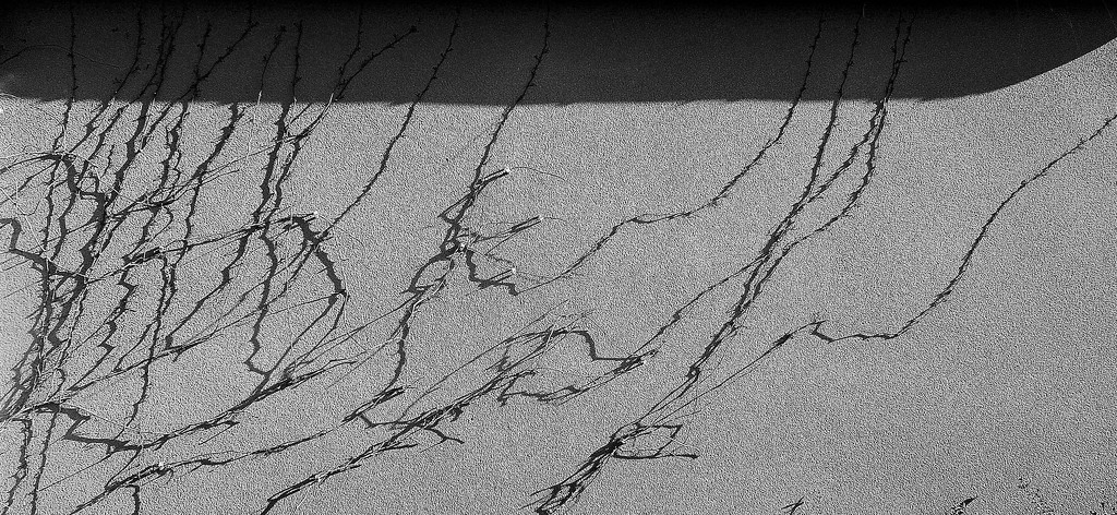 Vine shadow by etienne