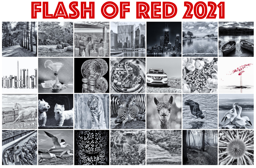 Extras album - Flash of Red 2021 by pamknowler