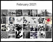 28th Feb 2021 - FoR 2021