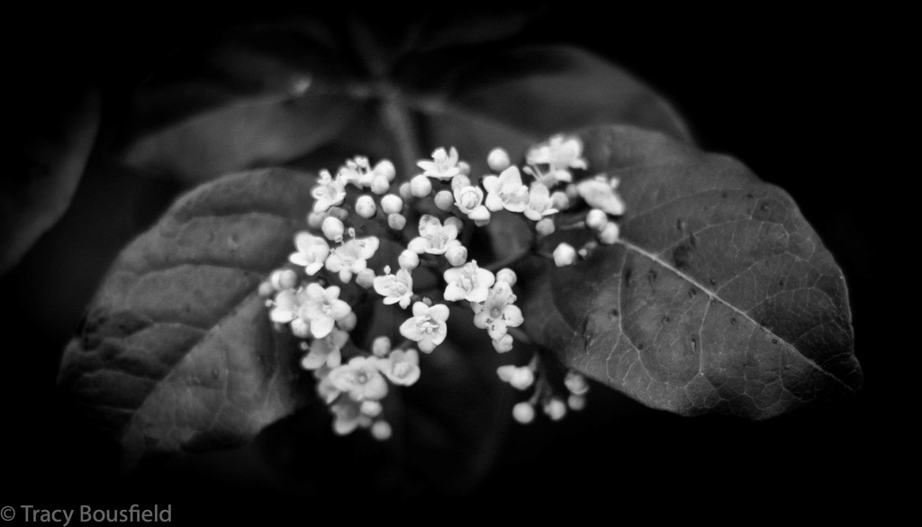 Plant by tracybeautychick