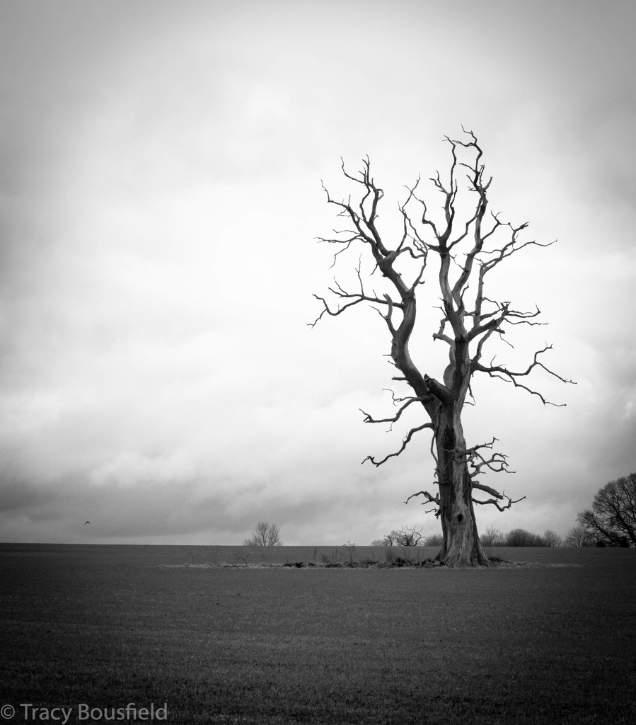 Lightening Tree by tracybeautychick