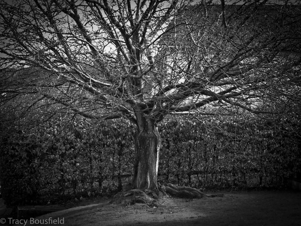 Shrub or short tree? by tracybeautychick