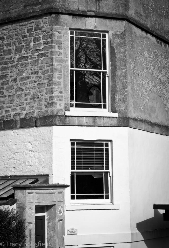 Doggie in the window by tracybeautychick