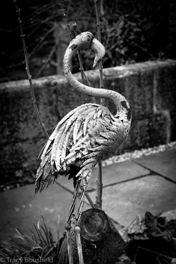 Flamingo by tracybeautychick