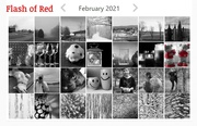 28th Feb 2021 - Flash of Red