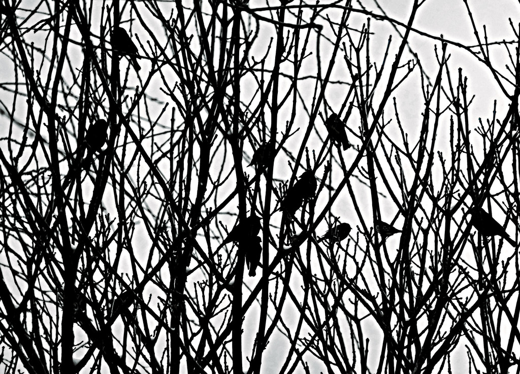 Birds In Branches by linnypinny