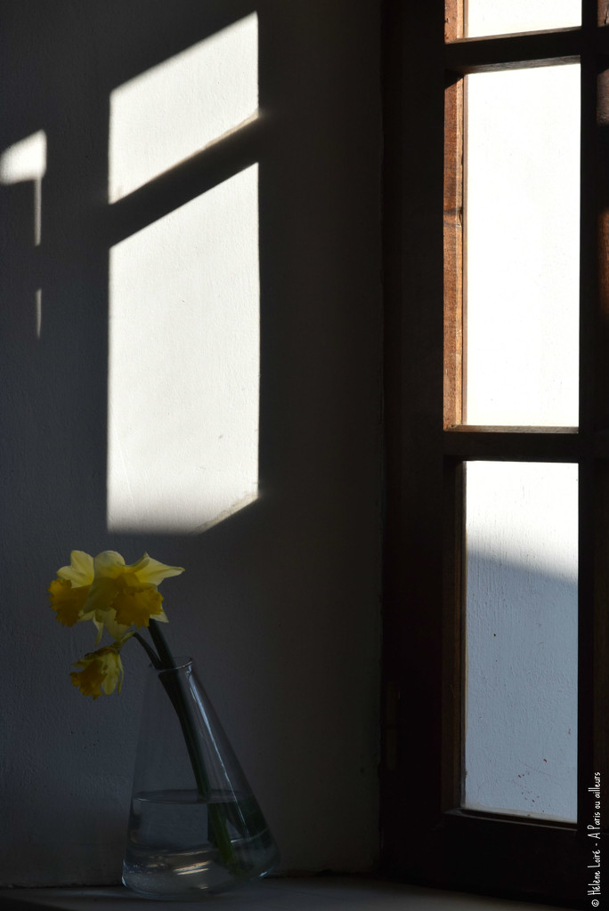 first Daffoldils of the year by parisouailleurs
