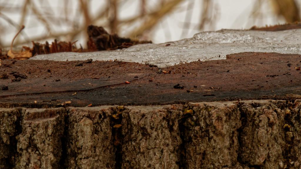 winter stump by rminer