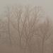 foggy treeline