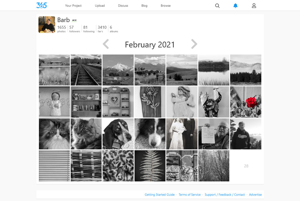 Screenshot_2021-02-27 February 2021 · Barb · 365 Project by bjywamer