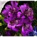 Part Of A Bouquet ~