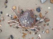 22nd Feb 2021 - crab