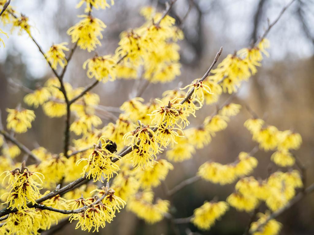 blooming by haskar