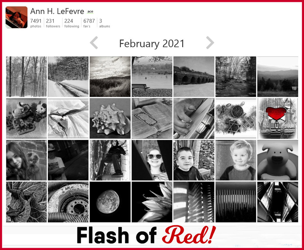 Flash of Red February 2021 by olivetreeann