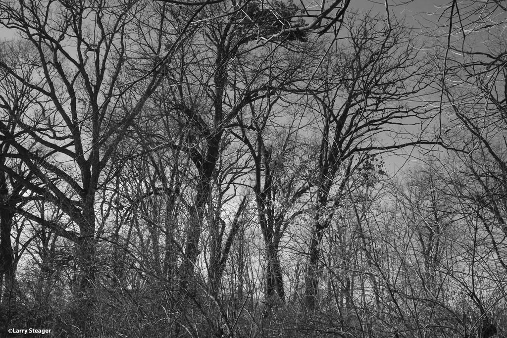 Woods by larrysphotos