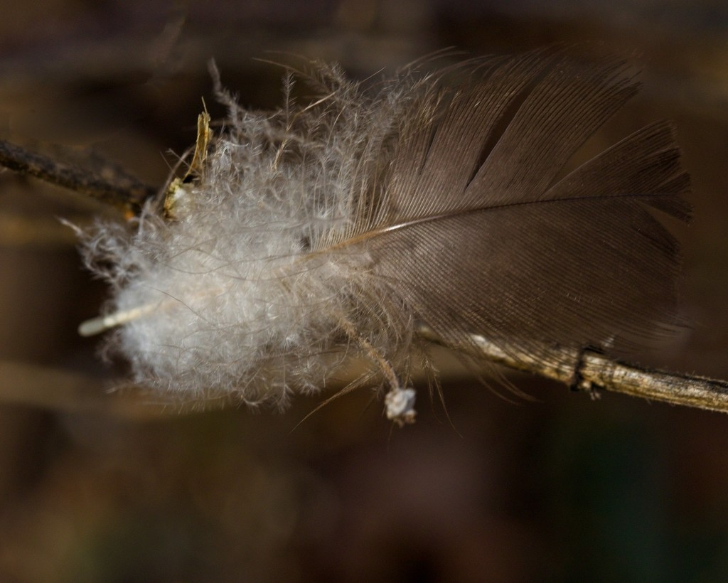 LHG_5557- feather by rontu